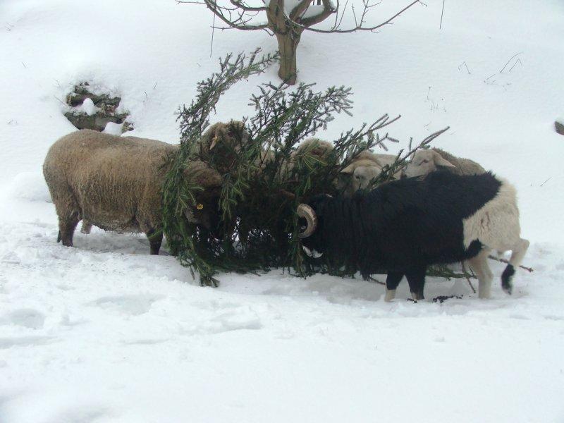 ekologické zpracování vánočního stromečku